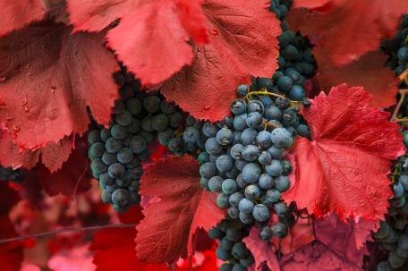 Resultado de imagen de foto de viña roja